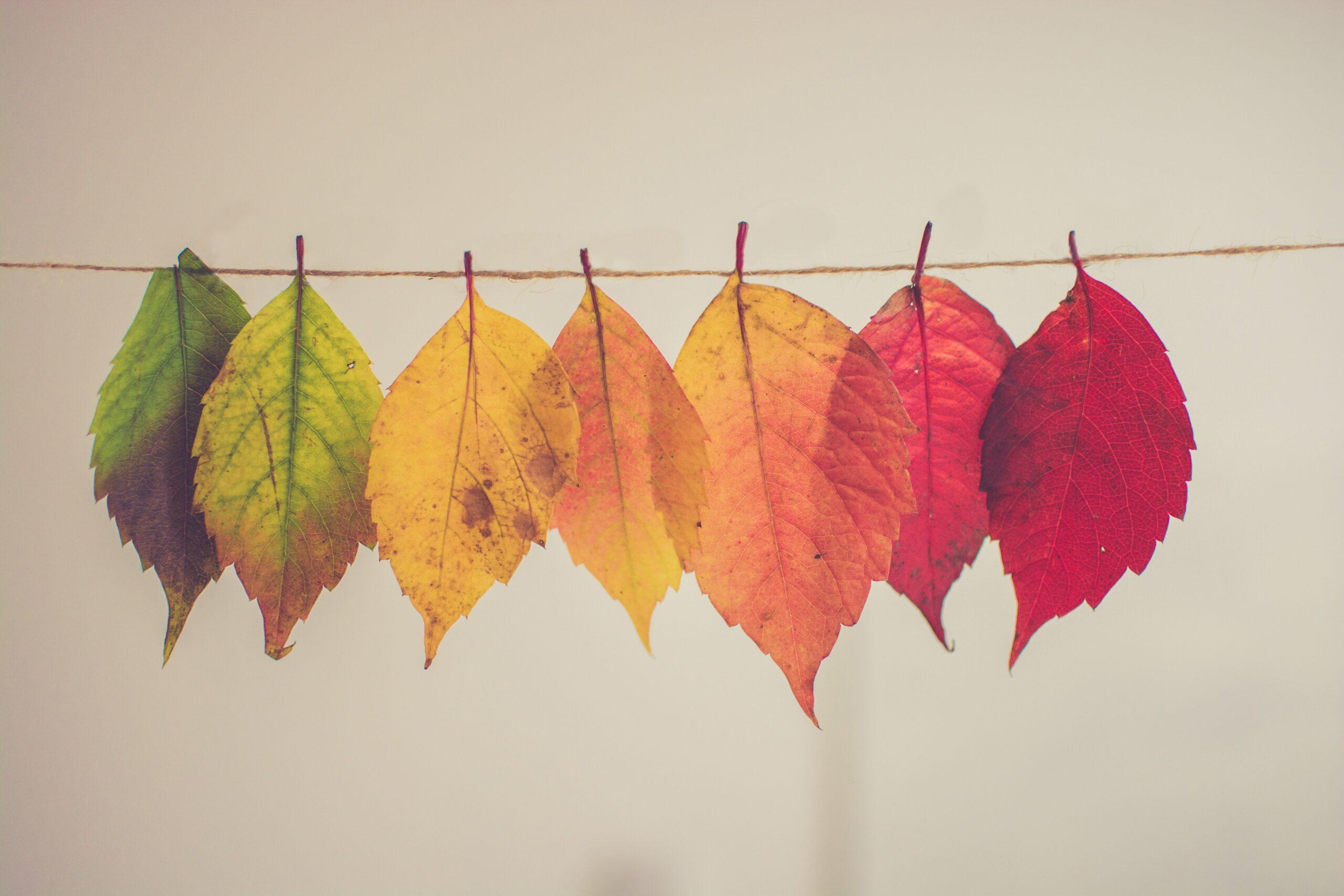 Décos d'automnes