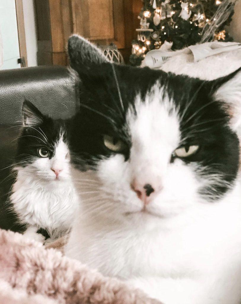 habitudes des chats qui font qu'on n'est pas tellement sûrs qu'ils nous aiment…