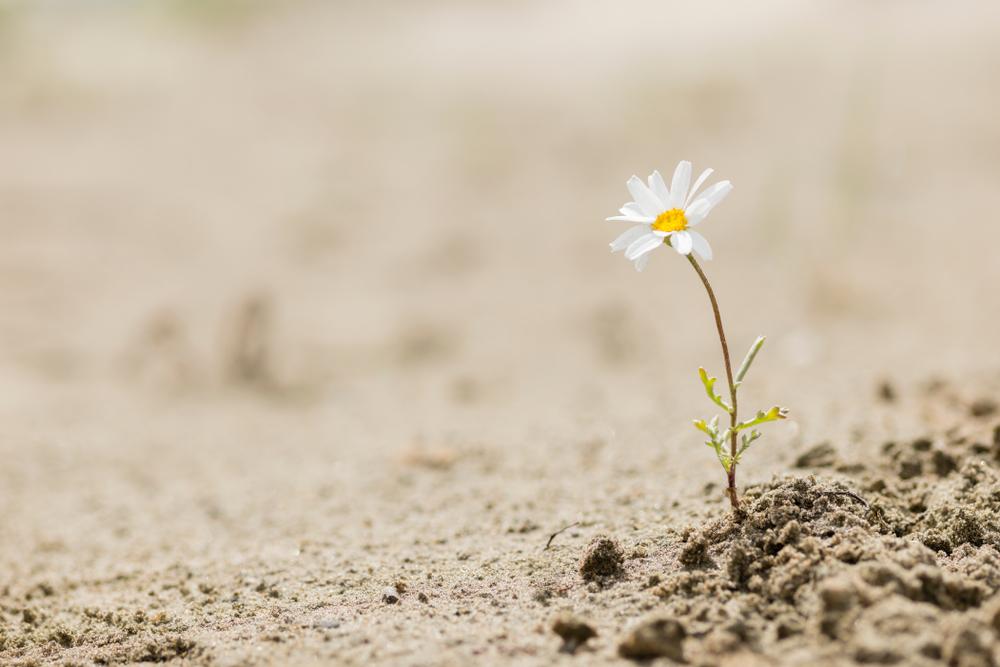 deuil et résilience du Covid 19