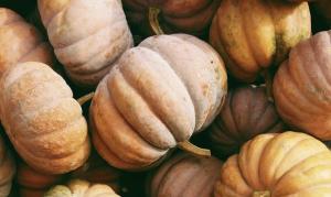 20 choses à faire en automne