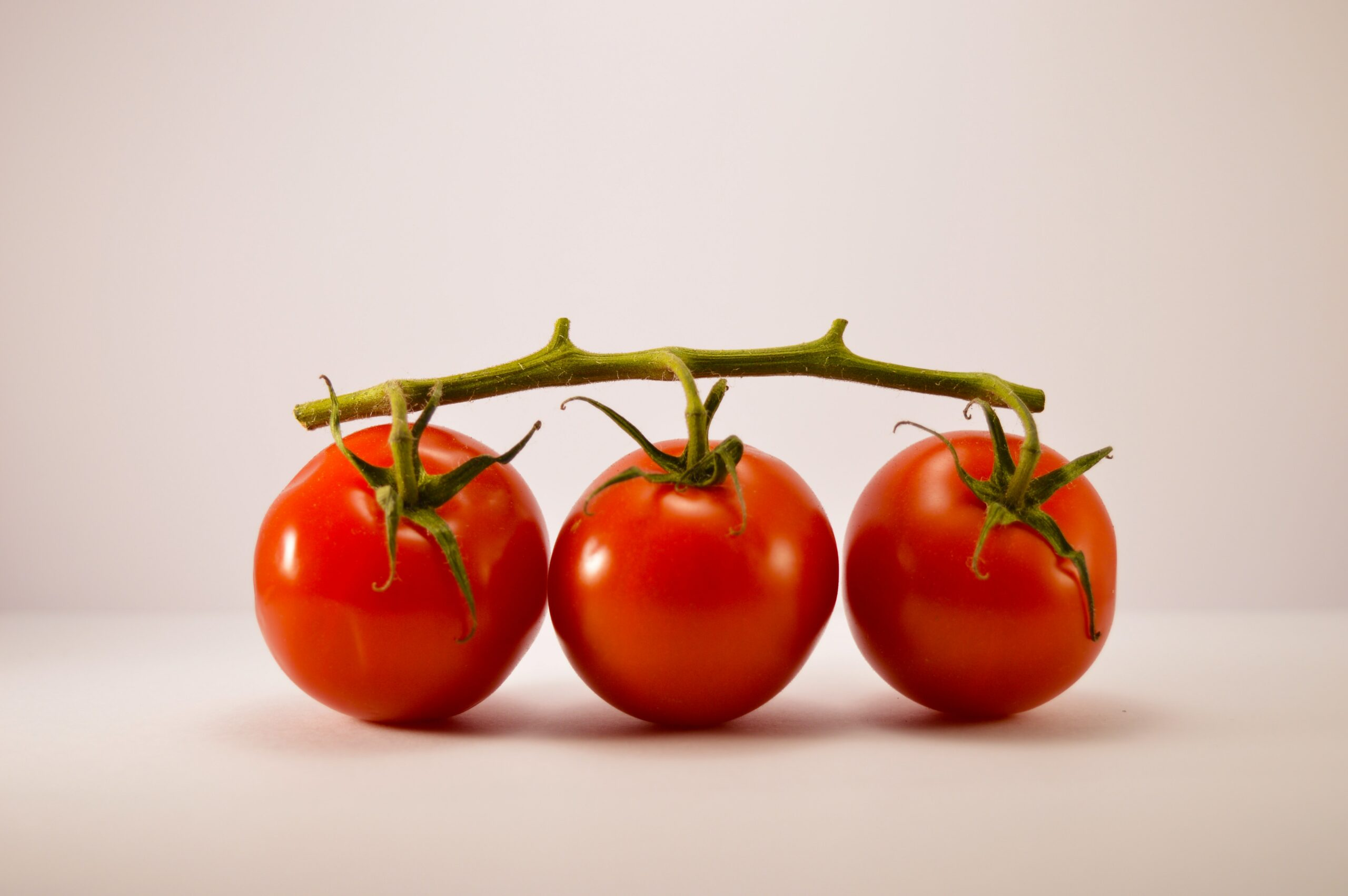 paranoïa tomatale