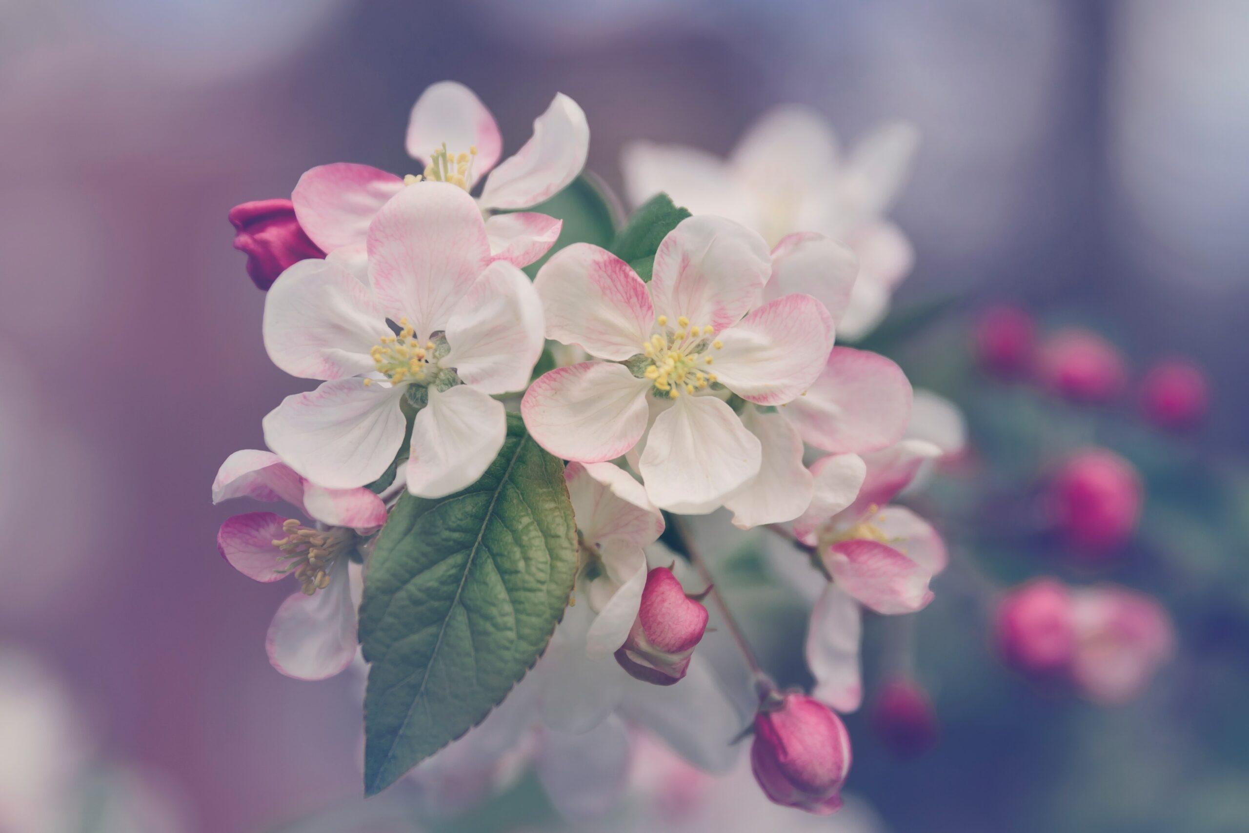 Plantons des fleurs